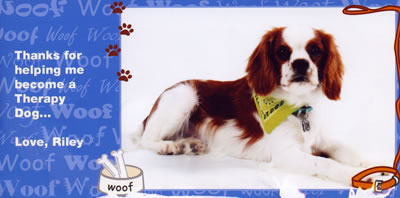 Photo of Riley on a Christmas Card