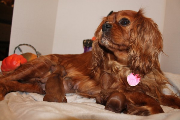 Poppy with her new puppies